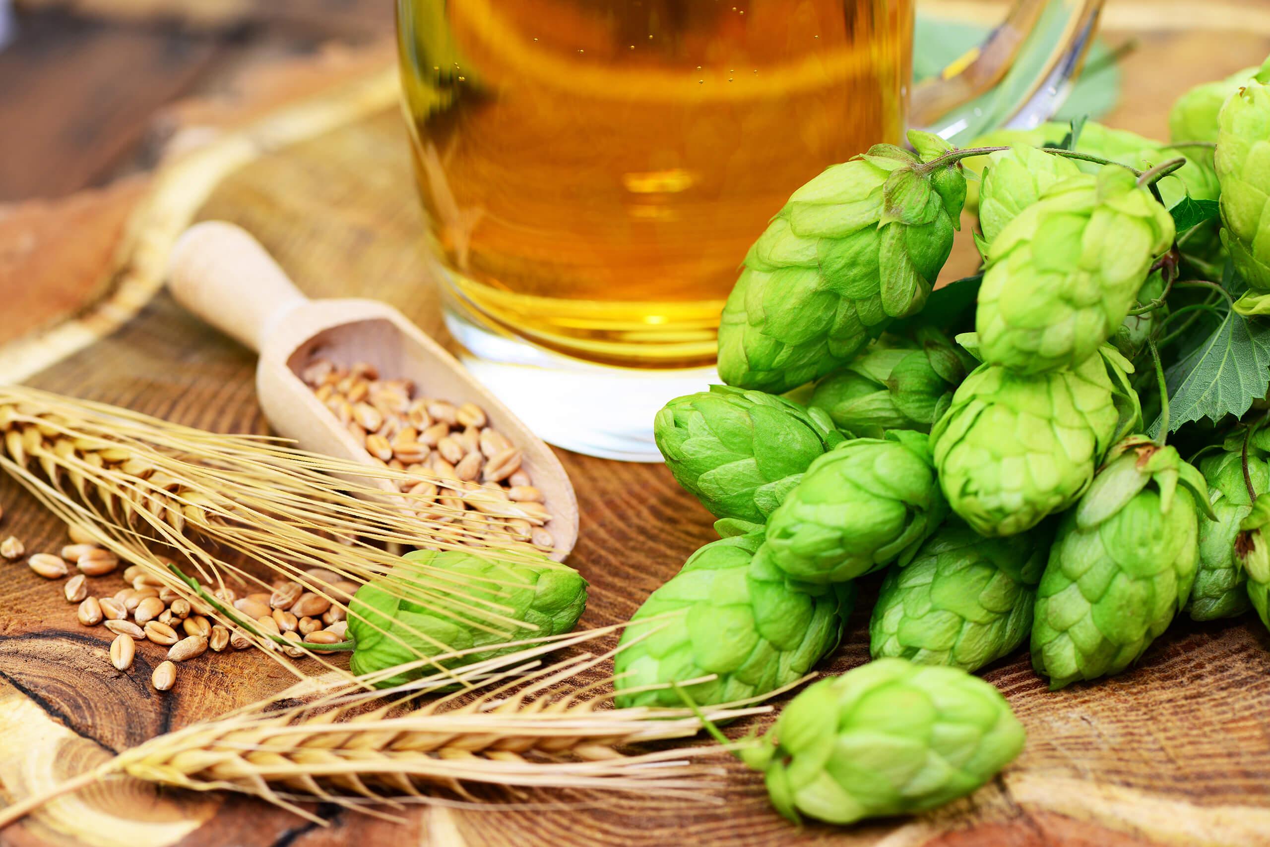 File graphic describing science of brewing beer