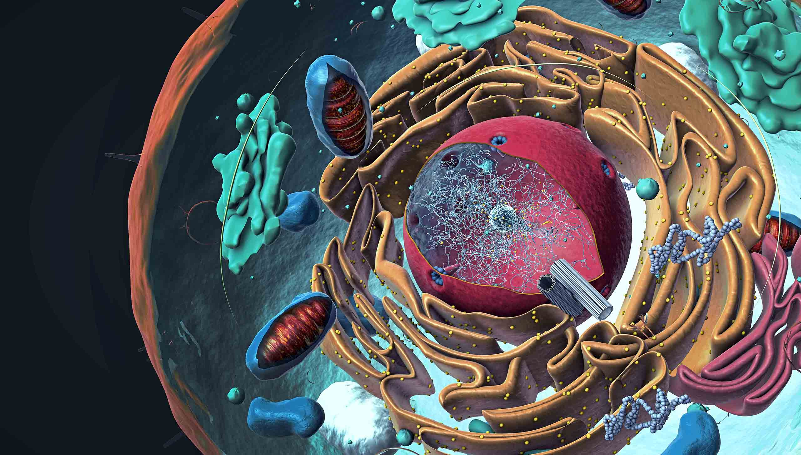 Components of Eukaryotic cell, nucleus and organelles and plasma membrane - 3d illustration