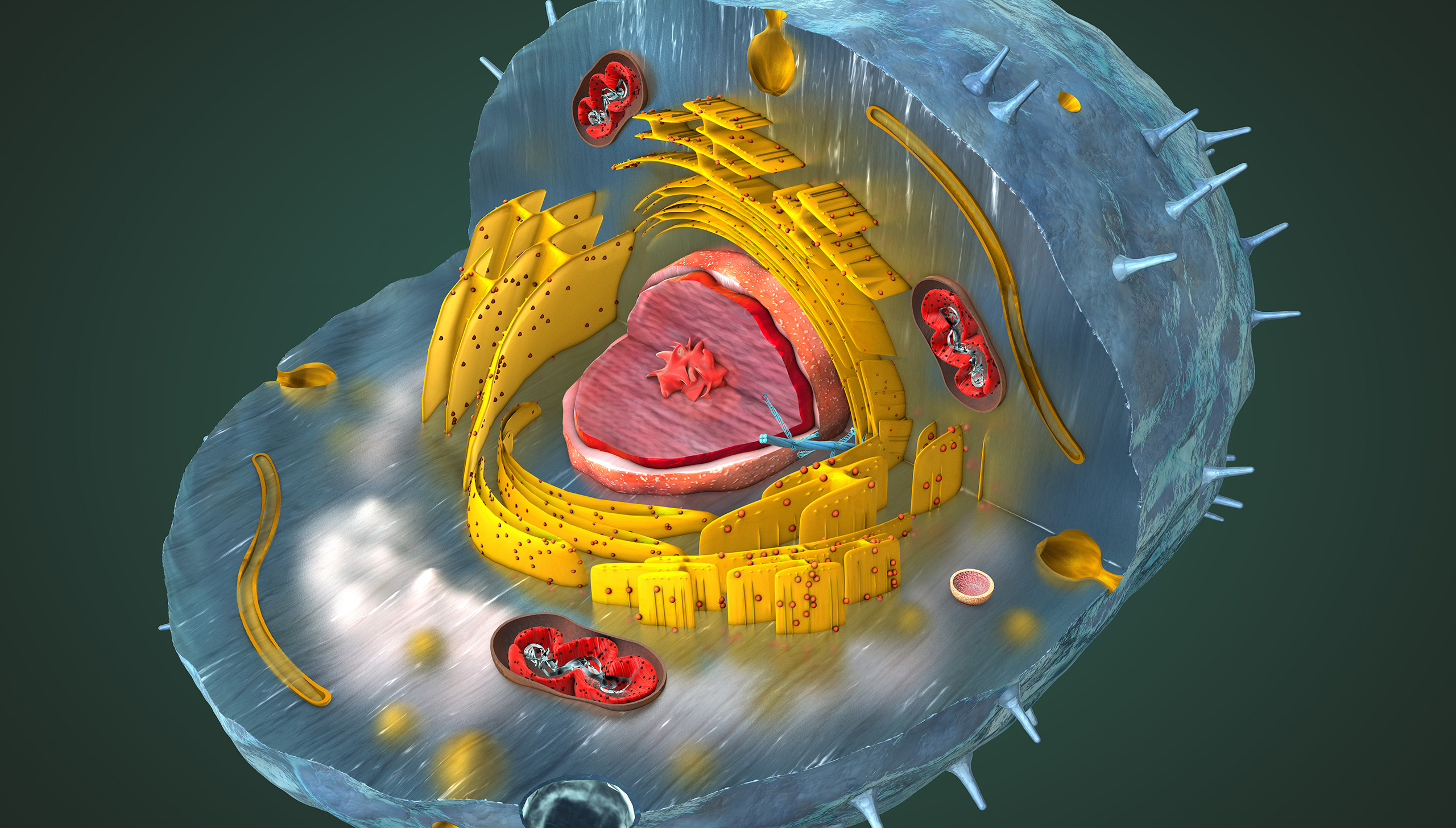 Scientifically correct 3d illustration of the internal structure of a human cell, cut-away